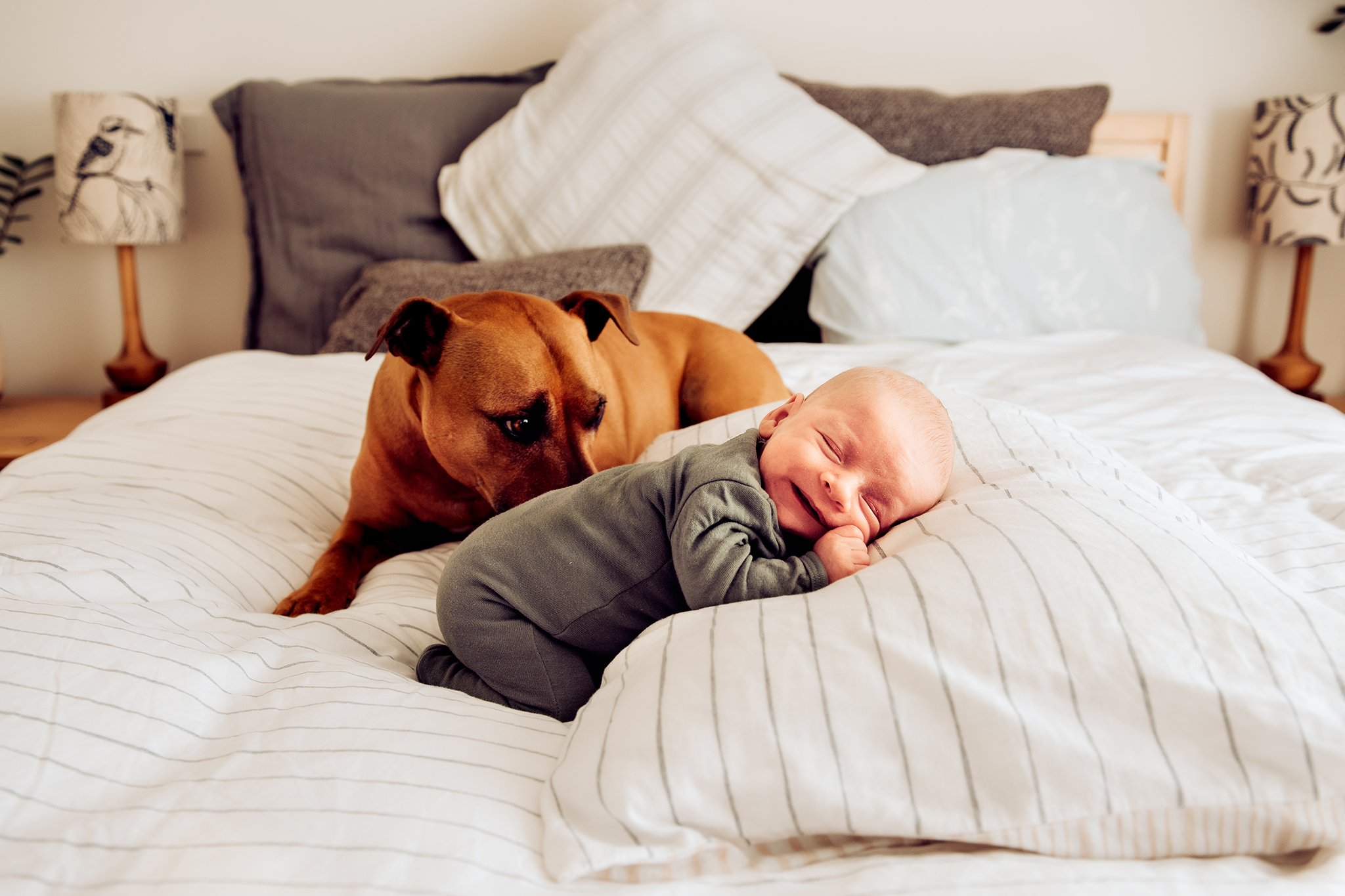 canberra newborn photographer baby and puppy on bed